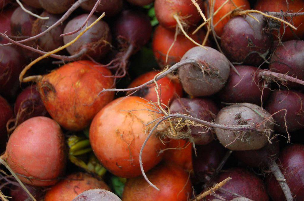 Лучшие сорта свеклы на 2021 год для хорошего урожая