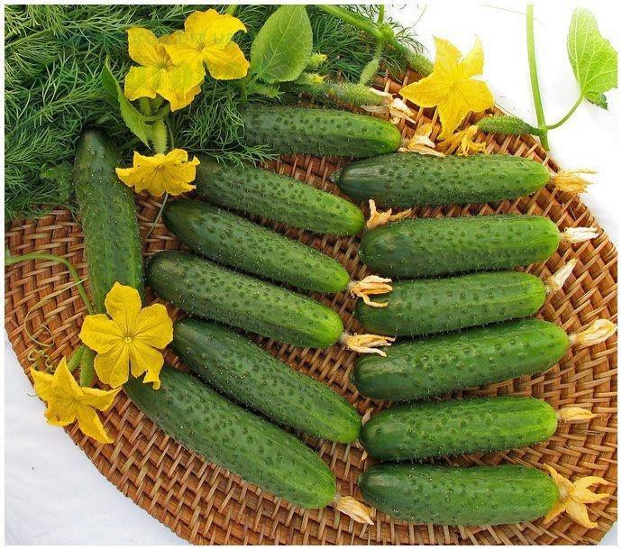 Лучшие сорта огурцов на 2021 год для хорошего урожая