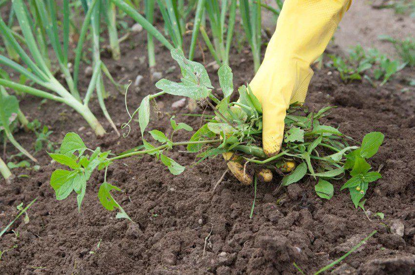 Борьба с сорняками на огороде по современному