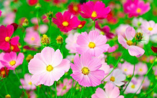 Посадка цветов в июне 2021 благоприятные дни по лунному календарю