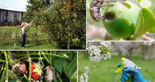 Чем и когда опрыскивать плодовые деревья и кустарники весной от вредителей и болезней