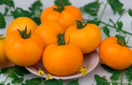 Как замораживать помидоры на зиму в морозилке правильно?