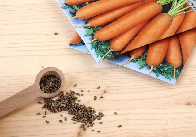 Посадка моркови осенью 2021 под зиму на Урале