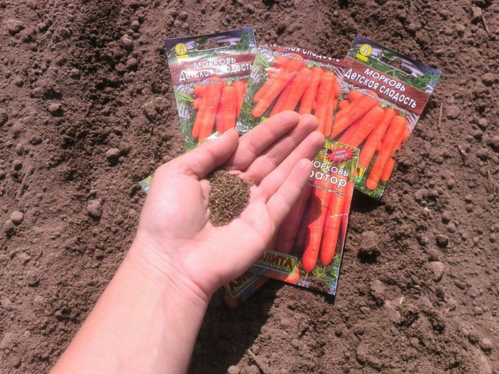 Посадка моркови осенью 2021 под зиму в Подмосковье